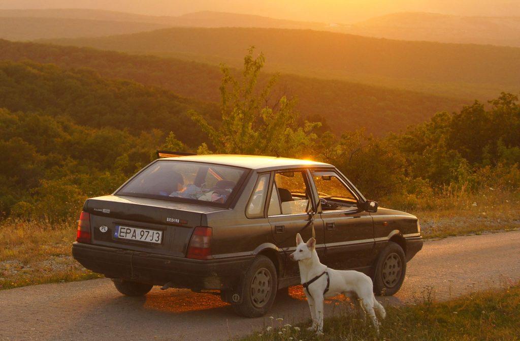 Hodowla Białych Owczarków Szwajcarskich Clockwork Shepherd Mieciu the Dog